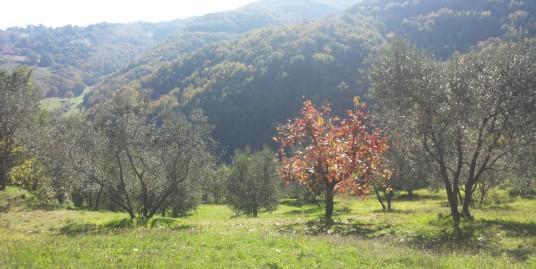 Rieti- Sant'Elia: Rudere di circa 100 mq. Rif.1807