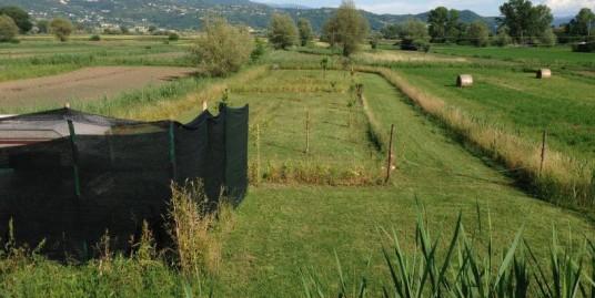 Rieti – Piana reatina –  terreno agricolo di 2100 Mq (Rif. 1954)